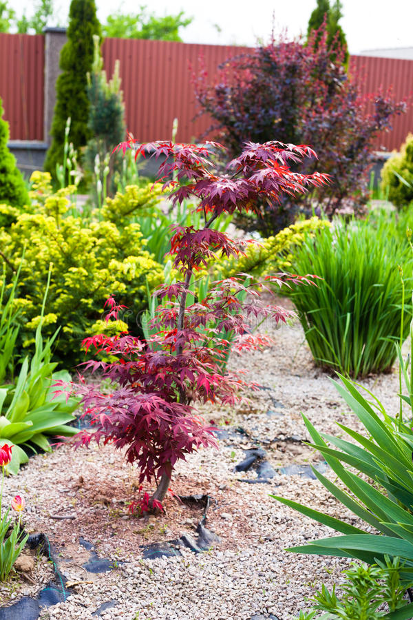 Beautiful Rock Garden Stock Images