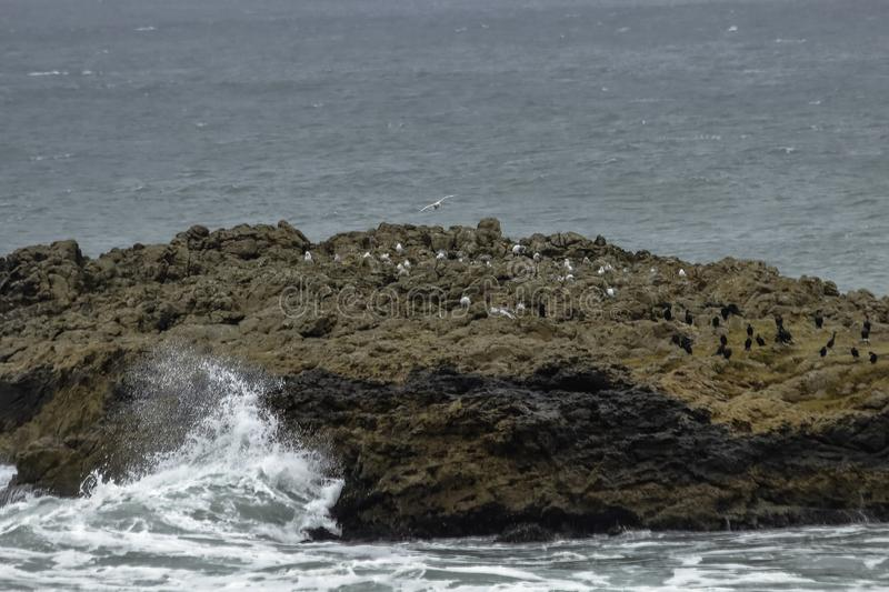 Beautiful rocks formations with birds near Half Moon Bay, California royalty free stock images