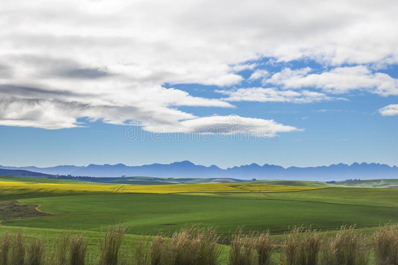 Beautiful rolling green and yellow fields with mountains in the distance with blue sky and cluds. Caledon, Western Cape, South Afr royalty free stock image