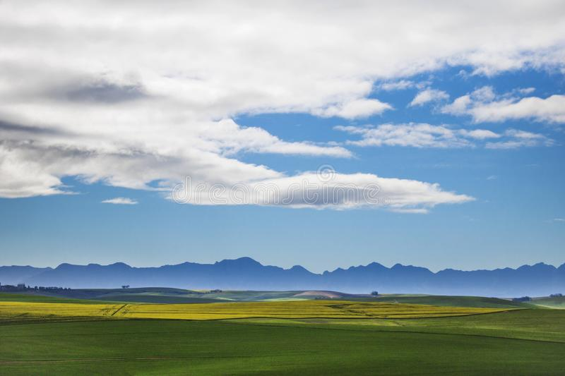 Beautiful rolling green and yellow fields with mountains in the distance with blue sky and cluds. Caledon, Western Cape, South Afr royalty free stock photography