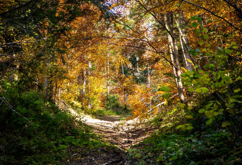 Beautiful romantic alley in a park with colorful trees. natural background. Beautiful romantic alley in a park with colorful trees, autumn landscape royalty free stock photo