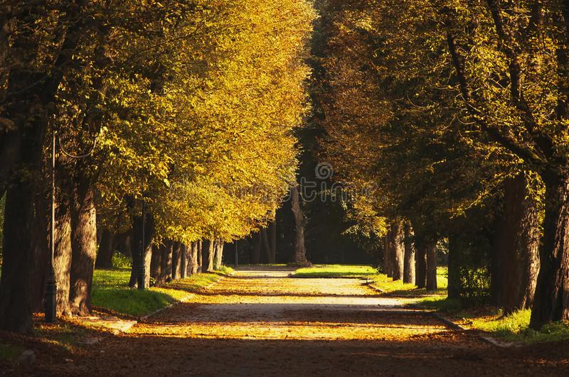 Beautiful romantic alley in a park with colorful trees and sunlight. Autumn natural background stock photography