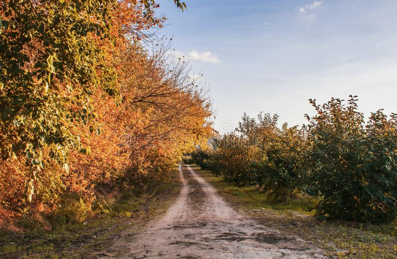 Beautiful romantic autumn with bright trees and sunlight. royalty free stock photo