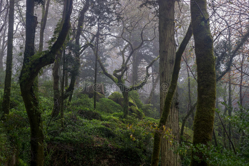 Beautiful romantic fairy forest in fog royalty free stock images