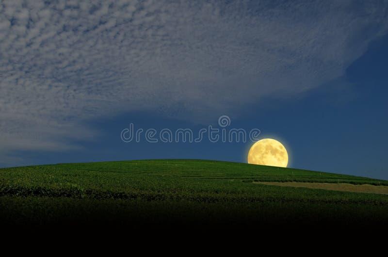 Beautiful romantic full moon over green tea hill in the evening. Beautiful romantic full moon in blue sky over green tea hill in the evening of winter vector illustration