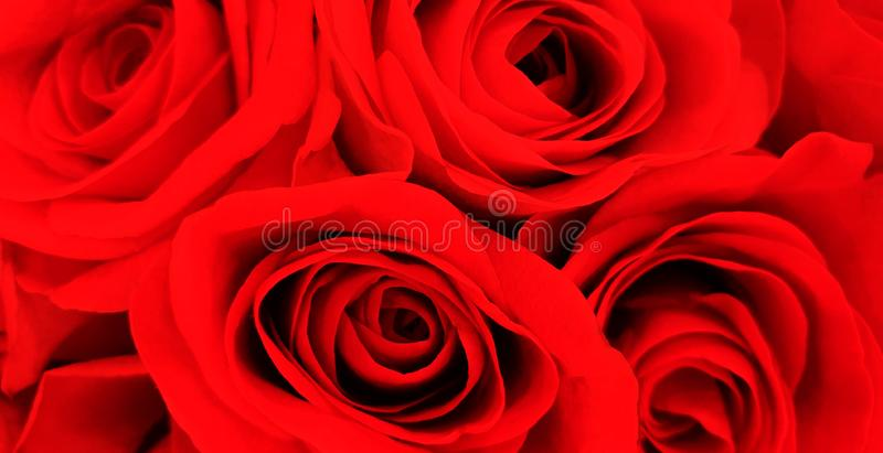 Beautiful romantic red roses background stock photo