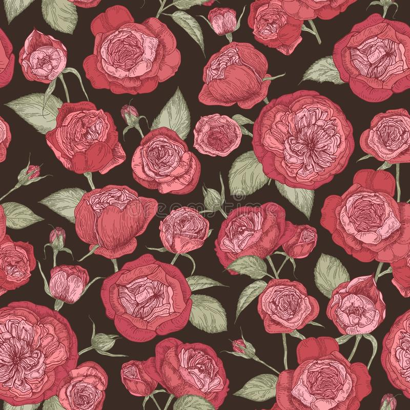 Beautiful romantic seamless pattern with blooming Austin roses on black background. Backdrop with gorgeous garden royalty free illustration