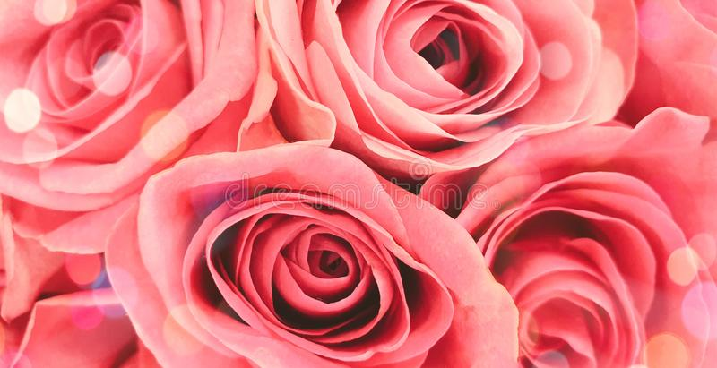 Beautiful romantic sparkling roses background stock images