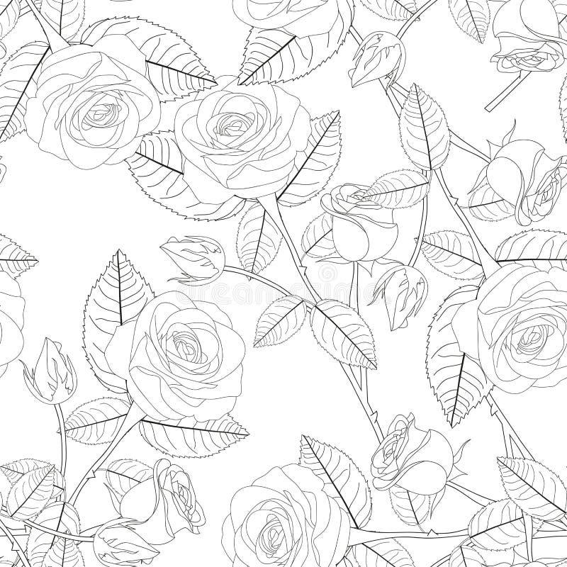 Beautiful Rose - Rosa on White Background. vector illustration