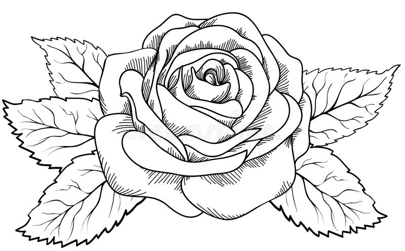 Beautiful rose in the style of black and white engraving. vector illustration