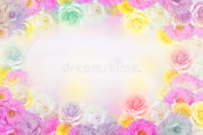 Beautiful roses flower border in soft pastel tone color stock images