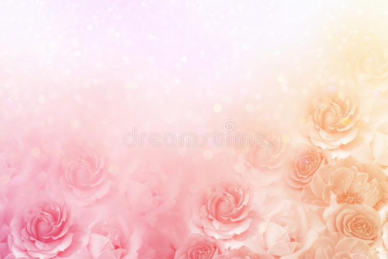 Beautiful roses flower border in soft vintage tone color royalty free stock image