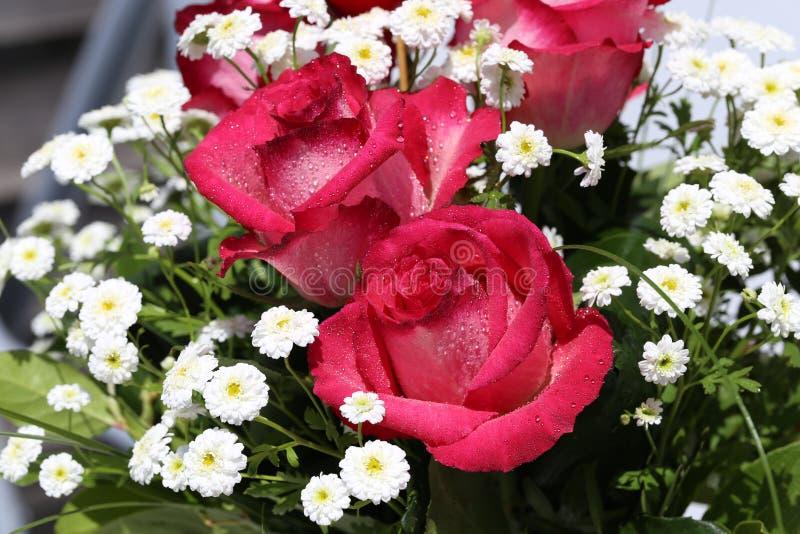 Download Beautiful roses stock illustration. Illustration of beauty - 94694611