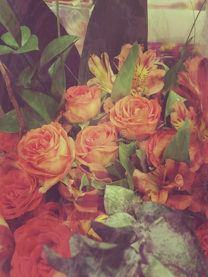 Beautiful roses just for you royalty free stock image