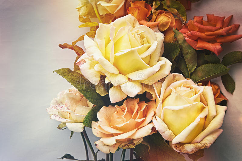 Beautiful Roses.Vintage styled. Beautiful Roses bouqet. Vintage styled stock photo