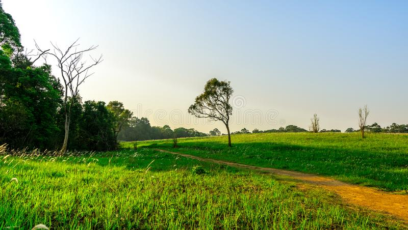 Beautiful rural landscape of green grass field with dusty country road and trees on hill and clear blue sky. Nature composition. stock photos