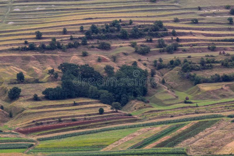 Beautiful rural landscape with trees and fields. And a heart shaped forest stock photos