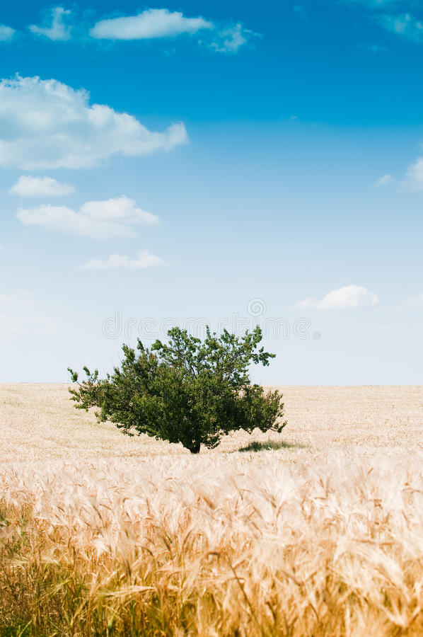 Free Beautiful Rural Landscape With Tree Stock Images - 10553064
