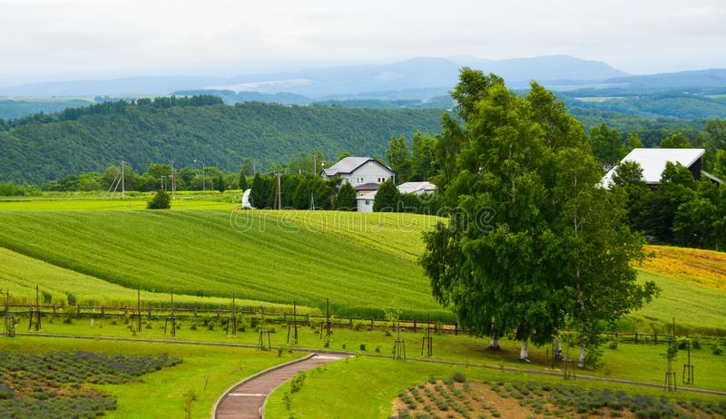 Beautiful rural scenery at summer day stock image