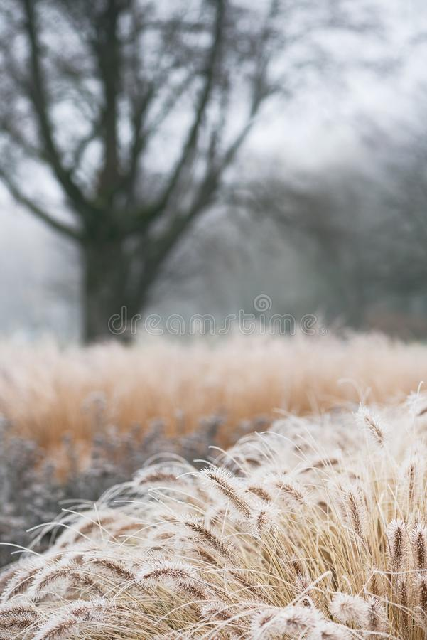 Beautiful rural winter foggy landscape with hoarfrost on grass. royalty free stock photography
