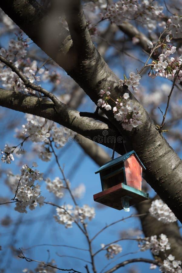 Beautiful Sakura in Canada stock photography