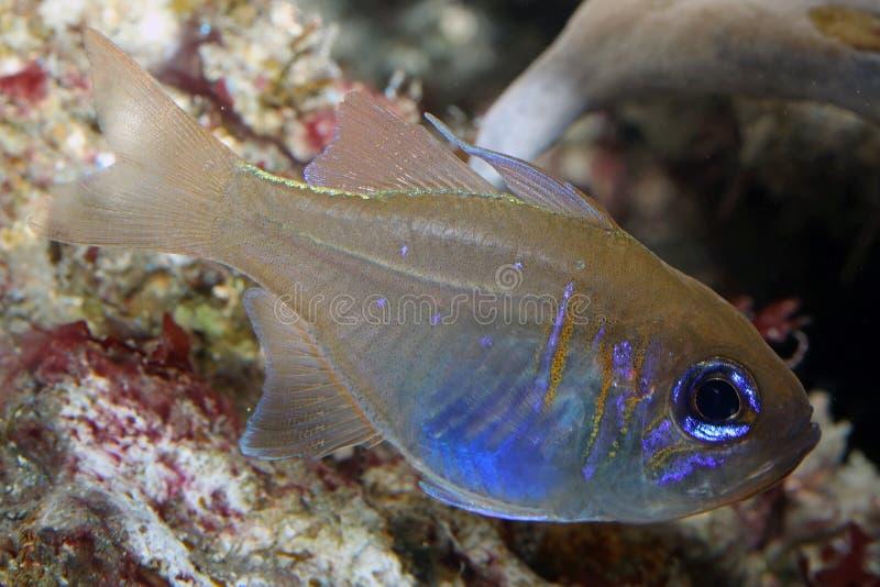 Salt water fish. A beautiful salt water fish stock images
