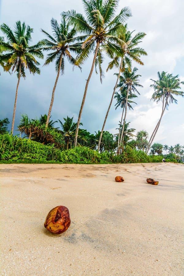 Beautiful sand beach in Galle, Sri Lanka. Beautiful sandy beach in Galle, Sri Lanka stock photo