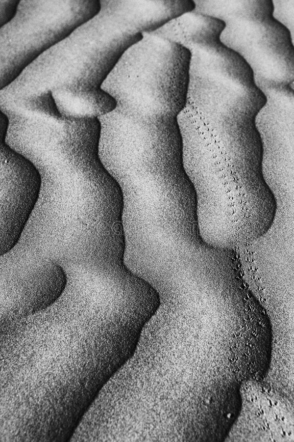 Beautiful Sand Dune Formations royalty free stock photography