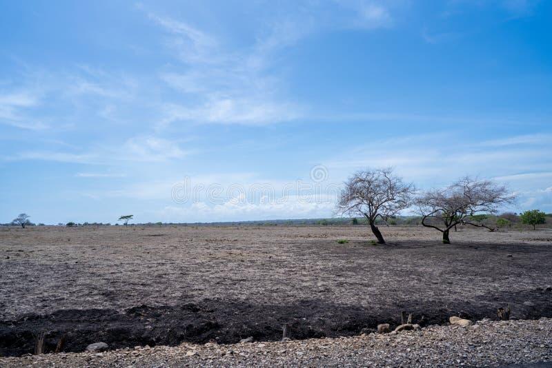 Beautiful savanna landscape in Baluran Banyuwangi indonesia. Portrait of dry two trees beautiful savanna landscape in Baluran Banyuwangi indonesia stock images