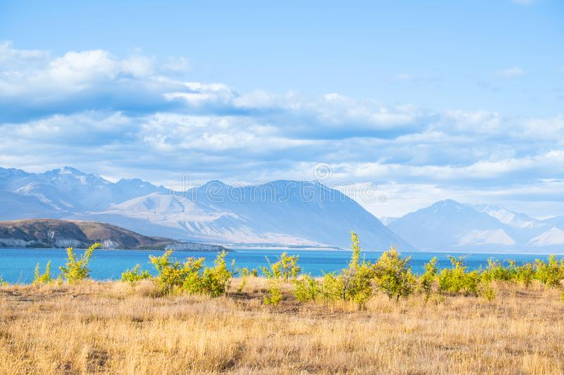 Beautiful scene of blue lake and yellow grassland with mount cook beside lake Tekapo before sunset. I. Beautiful scene of blue lake and yellow grassland with stock photo