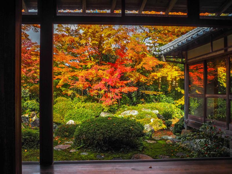 Beautiful scene of colorful autumn maple treess in japanese temple garden. For background royalty free stock photo
