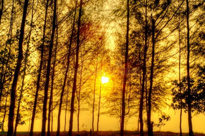 Beautiful scene in forest with sun. Beautiful scene in the forest with sun stock photo