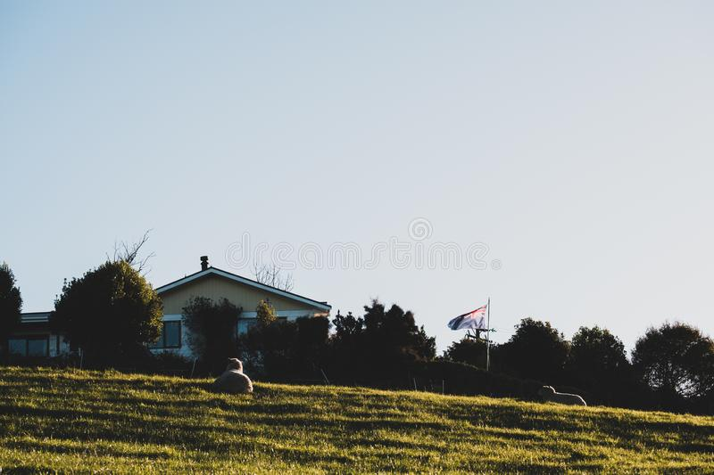 Beautiful scene of a house in rural area with yellow grass field and sheep. New Zealand. I royalty free stock photography