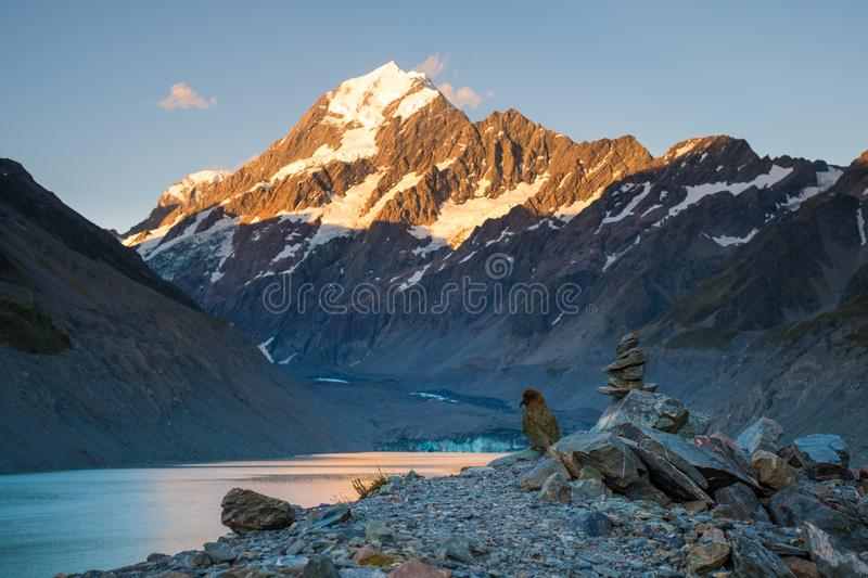 \'Beautiful scene of Mt Cook before the sunset with Kea Bird, Glacier lake and blue sky, Hook Valley Track, South Island, New stock images