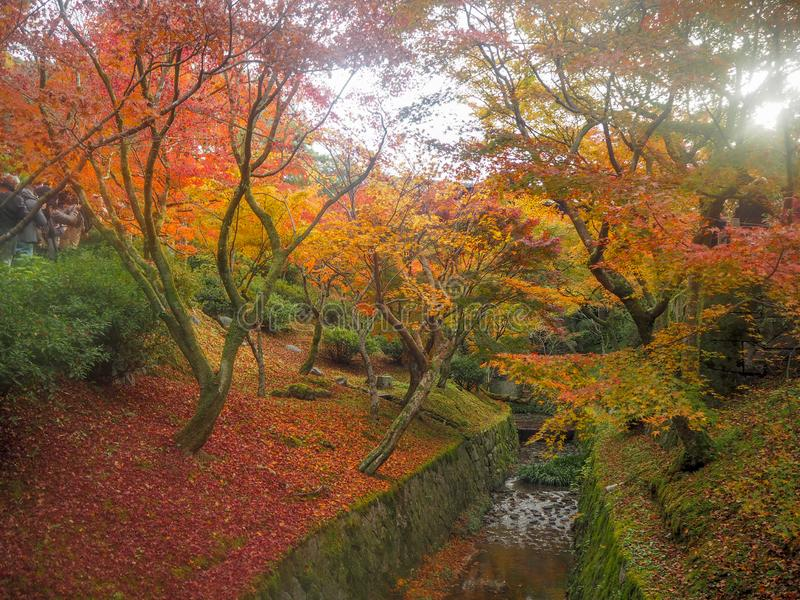 Beautiful scene of small canal in japanese temple garden with colorful maple trees. For background stock image