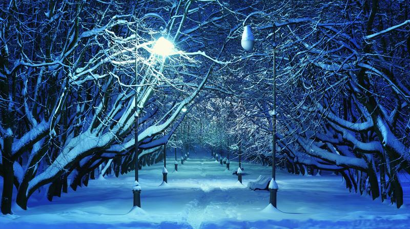 Winter Park Night Scene. Beautiful scene in winter park at night. Photo taken at the alley of the Botanical Garden in Minsk, Belarus royalty free stock images