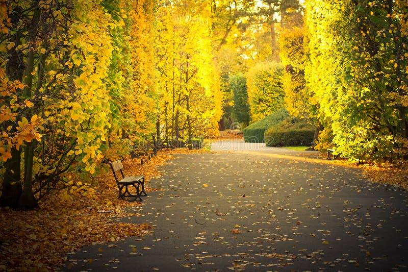 Beautiful scenery in autumnal yellow park stock photo
