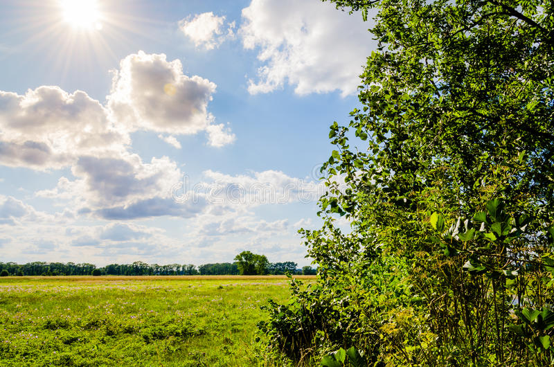 Beautiful scenery. Blue sky with clouds and sun and sunbeams around. Green field framed with trees. royalty free stock photo