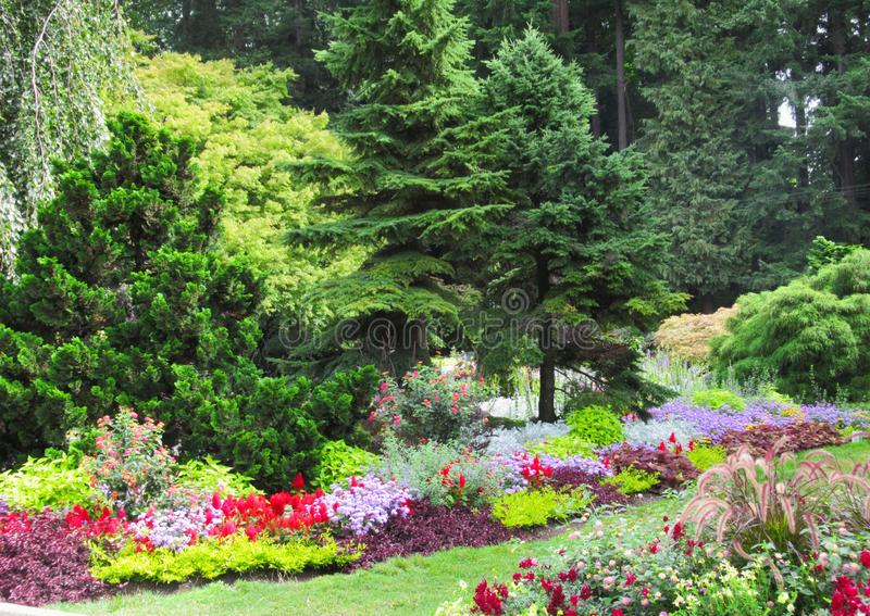 Beautiful Scenery Of Colourful Flower Bed And Trees In Vancouver Stanley Park Perennial Garden. Beautiful Scenery Of Colourful mixed Flower Bed And Trees In royalty free stock photography