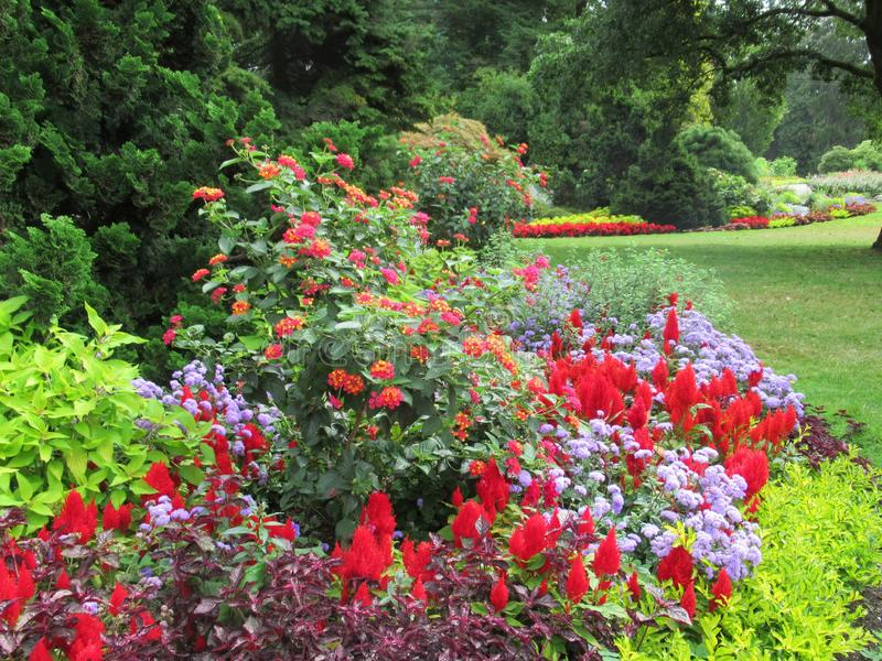 Beautiful Scenery Of Colourful Flower Bed And Trees In Vancouver Stanley Park Perennial Garden. Beautiful Scenery Of Colourful mixed Flower Bed And Trees In stock image