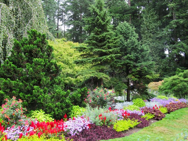 Beautiful Scenery Of Colourful Flower Bed And Trees In Vancouver Stanley Park Perennial Garden. Beautiful Scenery Of Colourful mixed Flower Bed And Trees In stock photos