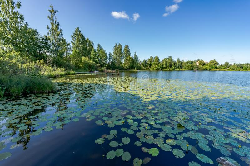 Beautiful scenery. Lake of the woods, water lilies on the water and wooden walkways. Beautiful nature of Russia stock images