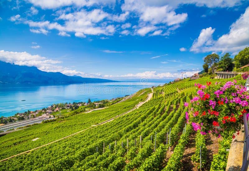 Beautiful scenery in Lavaux wine region with Lake Geneva, Switzerland. Beautiful scenery with vineyard terraces in famous Lavaux wine region, UNESCO World royalty free stock image