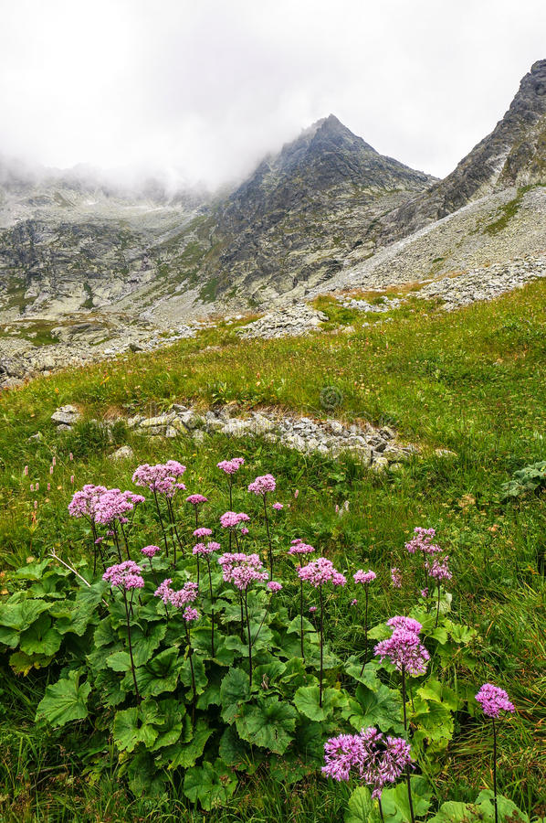 Download Beautiful Scenery In The Mountains. Slovakia Stock Image - Image: 34187963
