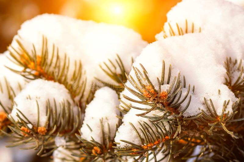 A beautiful scenery from the nature during cold winter day. A tree branch is covered with snow and the snow is falling in the royalty free stock photography