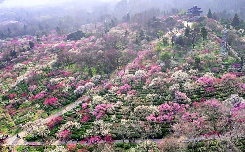 Aerial photography - Meihuashan Wanmu Meiyuan stock photos