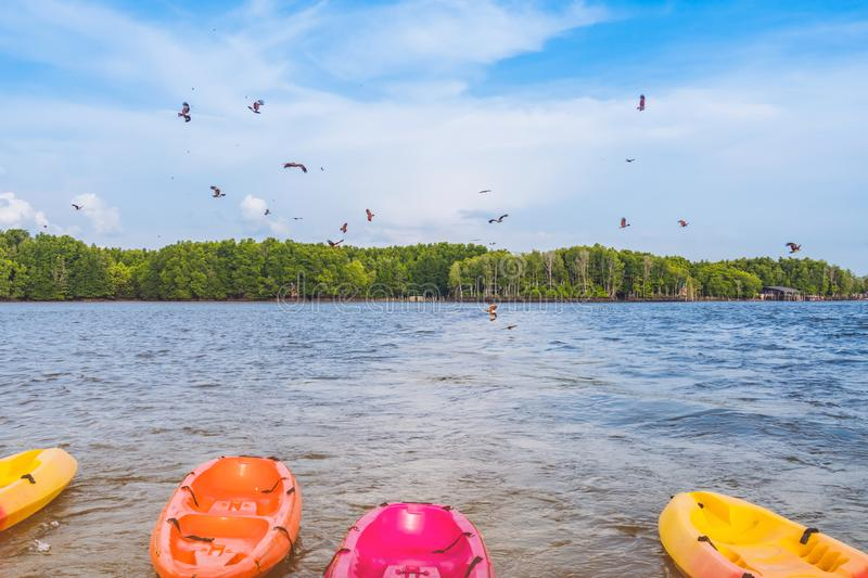 Beautiful scenery of the red hawks while flying to find food with kayaks floating in the sea at Bang Chan village The No-Land royalty free stock photography