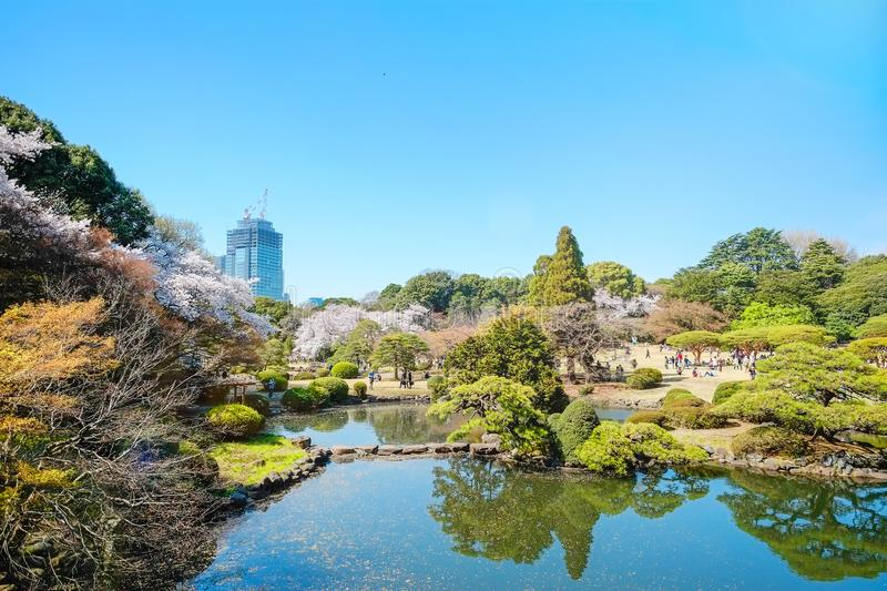 Spring cherry blossom season in Shinjuku Gyoen Park, Tokyo, Japan. Beautiful scenery with red leaf, green willow, blossom sakura, clear pond and bright vivid stock photography
