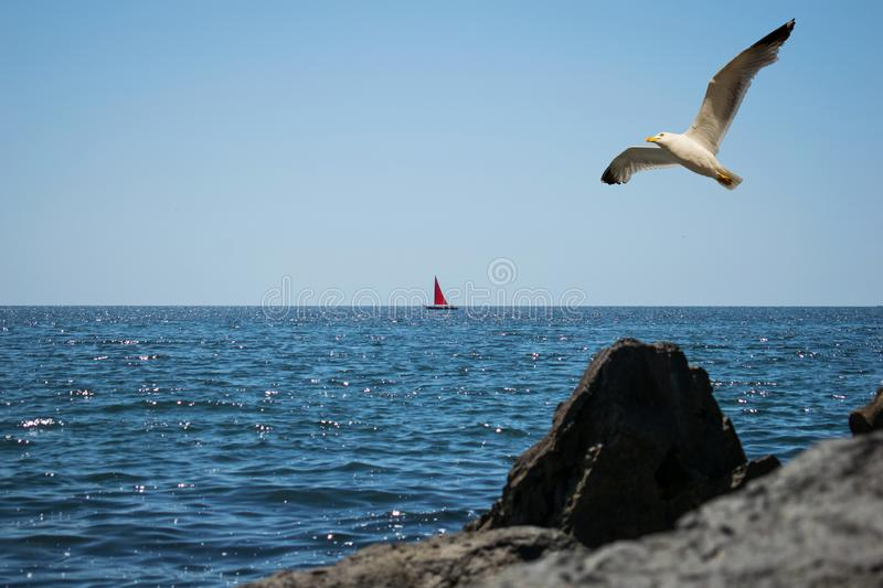 A beautiful scenery at the sea. A red sail boat is seen on the horizon. A great seagull crosses the blue sky in a summer day. royalty free stock photography