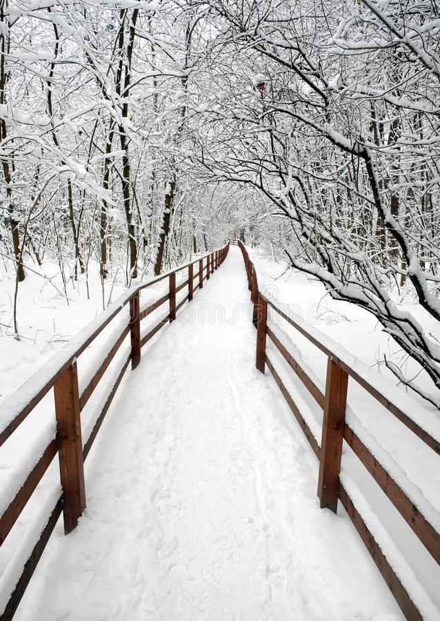 Beautiful scenery with a snow-covered path with wooden fence in the forest among the trees after a snowfall on a cloudy winter day stock image